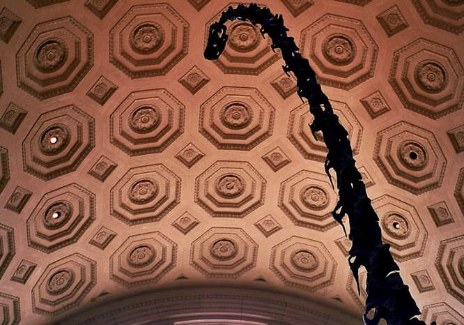 American Museum of Natural History in NYC New York, Travel Photography © Amy Weiser, Photographer