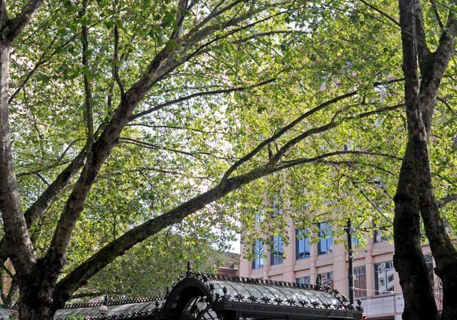 Seattle, Washington, Travel Photography © Amy Weiser, Photographer