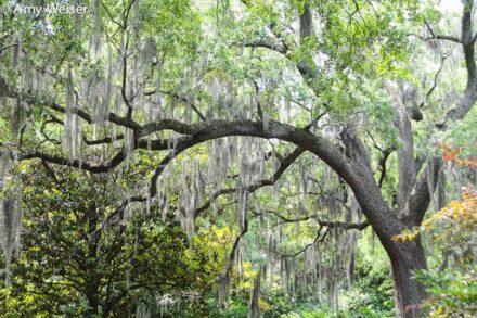 Savannah, GA Travel Photography © Amy Weiser, Photographer