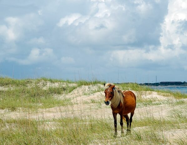 Outer Banks, North Carolina, Travel Photography © Amy Weiser, Photographer