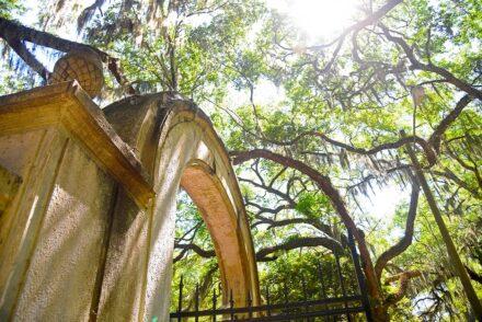 Wormsloe Historic Site in Savannah, GA © Amy Weiser, Photographer